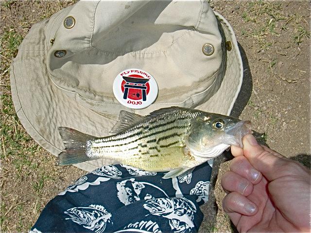 Bass 2 for Lower salt river fishing