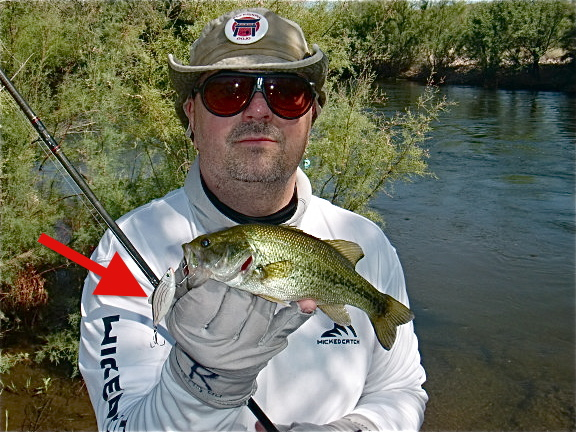 cool bass fishing pictures