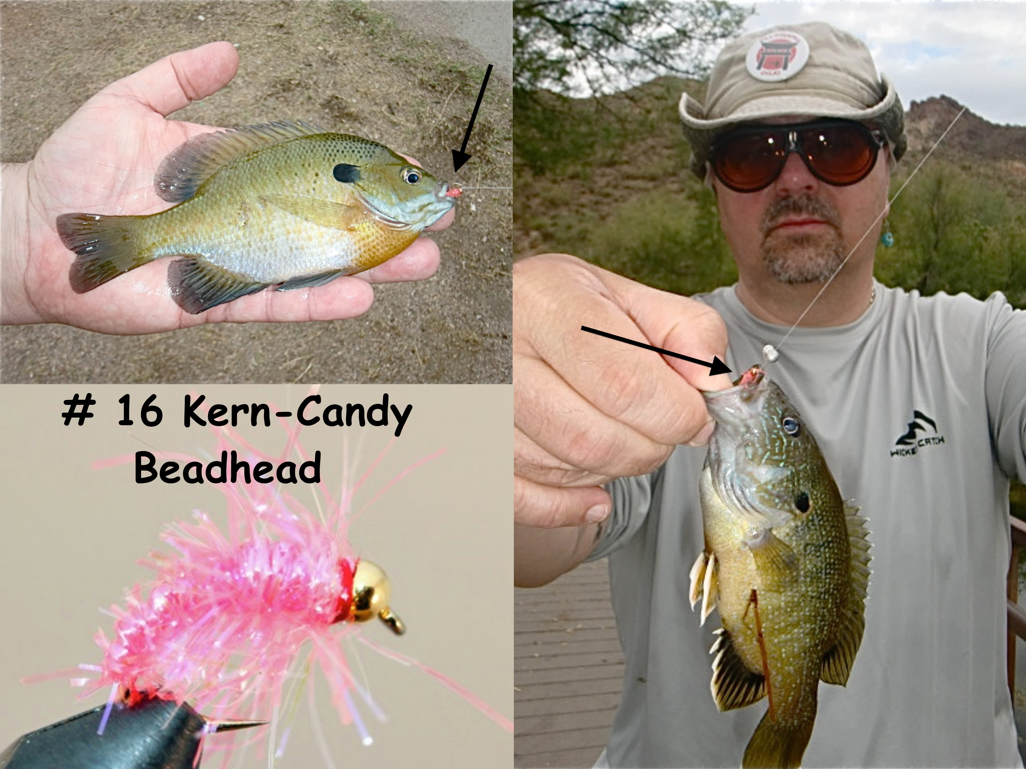 Fly fishing for bluegill fishing dojo for Fly fishing for bluegill