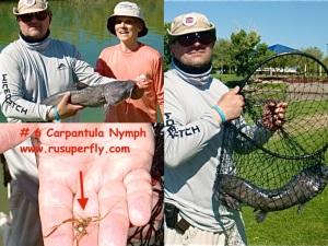 catfish-collage copy