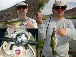 canyon bass collage-crankbait