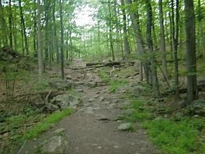 Ramapo Trail